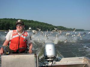 Asian carp leap into the water behind a government research boat on the Illinois River. (U.S. Fish and Wildlife Service photo)