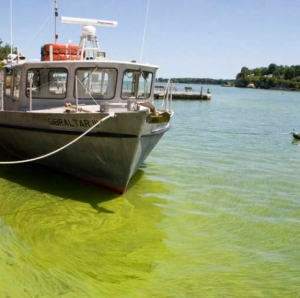 Toxic algae blooms have become an annual problem in western Lake Erie.